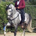 Dream fund: go to KY Horse Park
